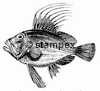diving stamps motif 2993 - Fish